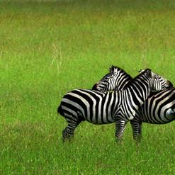 kimgoni-tanzania-safari-serengeti%20(10)