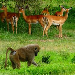 kimgoni-tanzania-safari-tarangire (5).jp