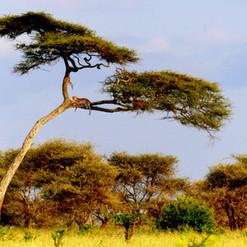 kimgoni-tanzania-safari-serengeti (2).jp