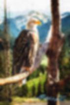web eagle.jpg