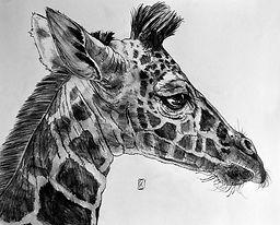 Giraffe P WEB.jpg