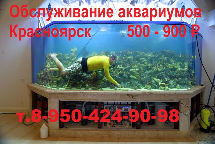 Обслуживание аквариумов в Красноярске