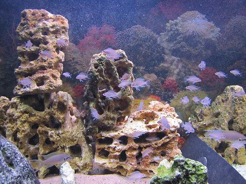 Песчаник аквариумный