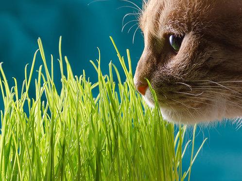 Травка пророщенная для кошек