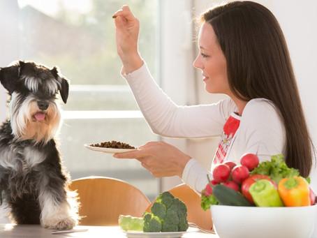 Alimentos que sorprenderán a tu perro
