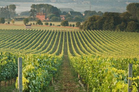 Our Vineyards - KC view.jpg