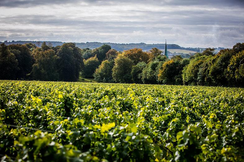 Simpsons Wine Estate @ Thomas Alexander