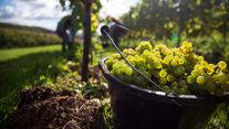 Vineyard tours