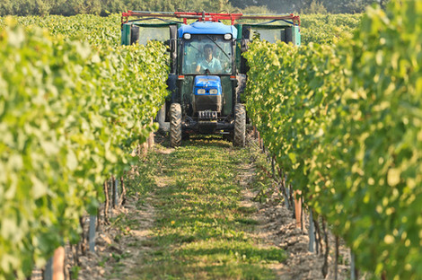 Our Vineyards - KC Tractor.jpg