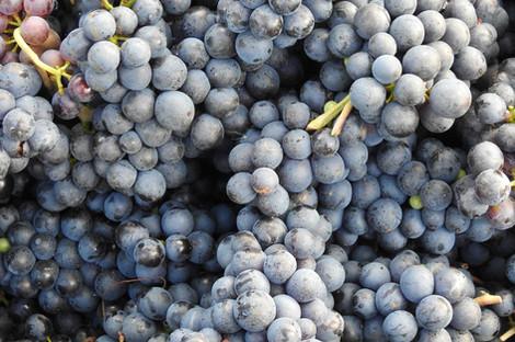 winery-image4.jpg