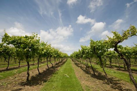 2 Biddenden Vineyards Blue Skies.jpg