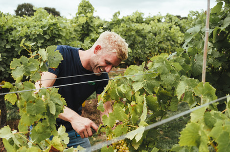Biddenden Vineyard - Tester Shoot070.JPG