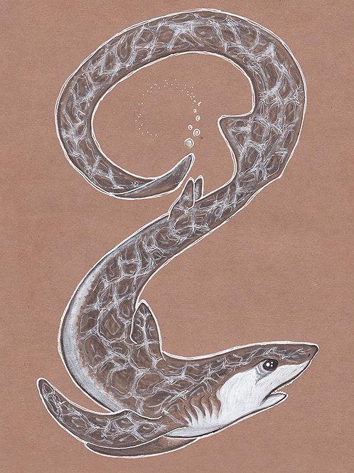 Thresher Shark - Print - various sizes - $15 to $35