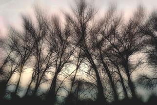 Birch Trees, Putnam County GA