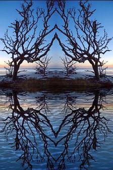 Reflective Symmetry #2