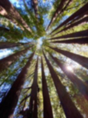 Trees of Colorado