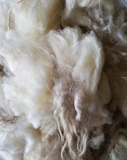 White Spotted Icelandic lamb fleece