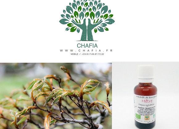 bourgeon d'hêtre Bio en gemmothérapie de la boutique Bio en soins et santé de Chafia.fr