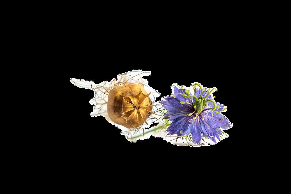 l'huile de nigelle de la boutique bio chafia.fr