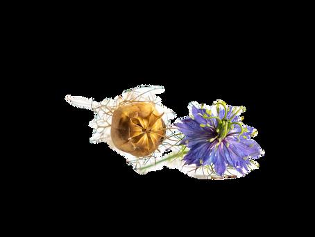 L' huile de nigelle : l'exceptionnelle