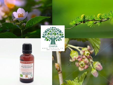 Les plantes contre les virus et pour votre système immunitaire