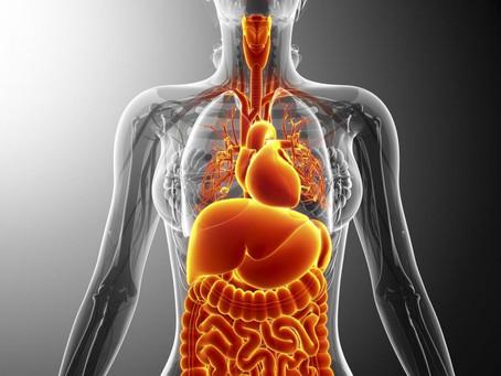 Le nouvel organe du corps humain