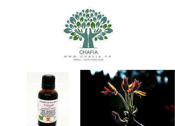 NOYER : Flore intestinale et système immunitaire