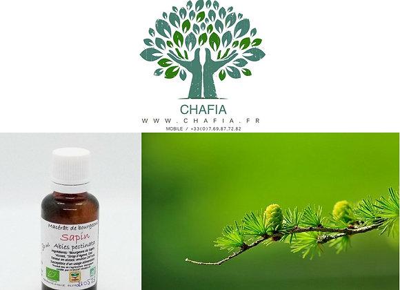bourgeon de sapin Bio en gemmothérapie de la boutique Bio en soins et santé de Chafia.fr