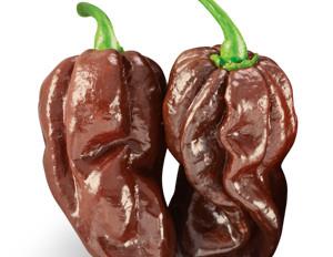 Super Hot Sauce - Chocolate Habanero #ChocolateHabanero