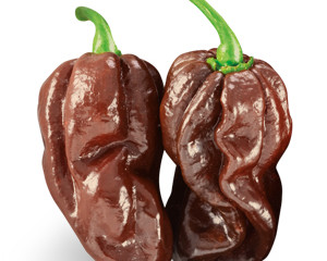 Super Hot Sauce - Chocolate Habanero #ChocolateHabanero