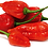 Thumbnail: Ghost Pepper (Bhut Jolokia)