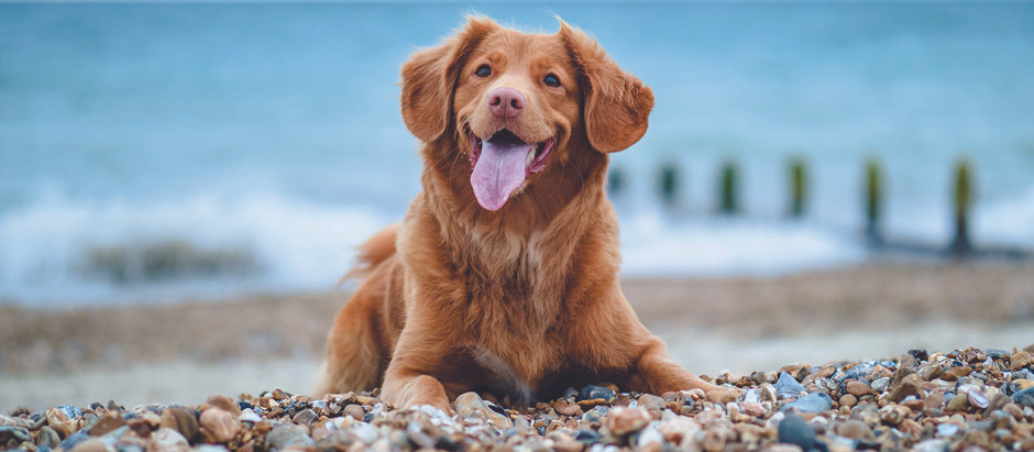 Summer tips for pet owners