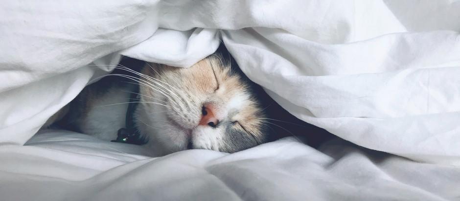 What is feline calicivirus?