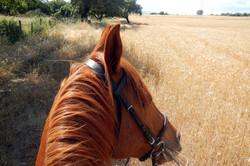 paseos a caballo Sotogrande