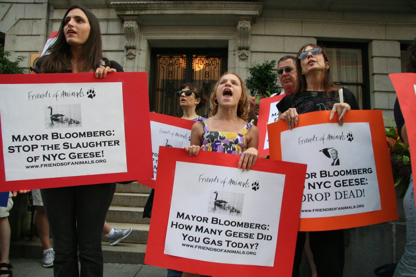 edita rose protest geese bloomberg.JPG