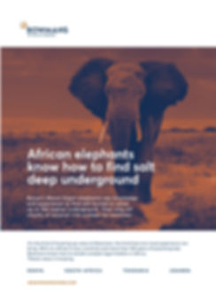 Bowmans ad.jpg