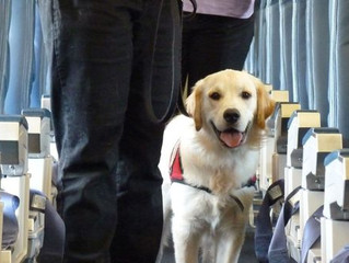 Service dogs and the Air Carriers Access Act