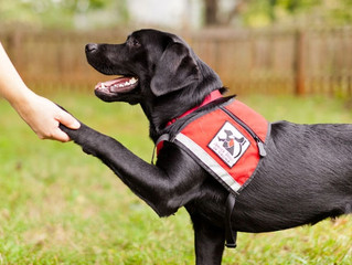 Handler and dog abilities to pass a Public Access Test