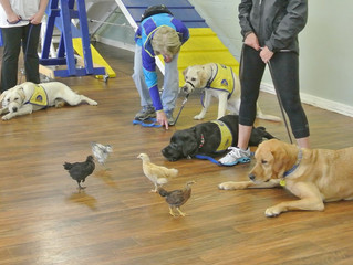 Can You Train Your Service Animal?