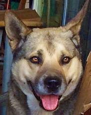 Mr. Pyramus T. Strongheart Dog (aka Mr. Dog)