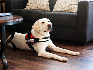 Correctly defining a Service, Assistance or Therapy Dog