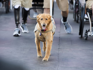 ADA addresses the rights of handlers in public facilities