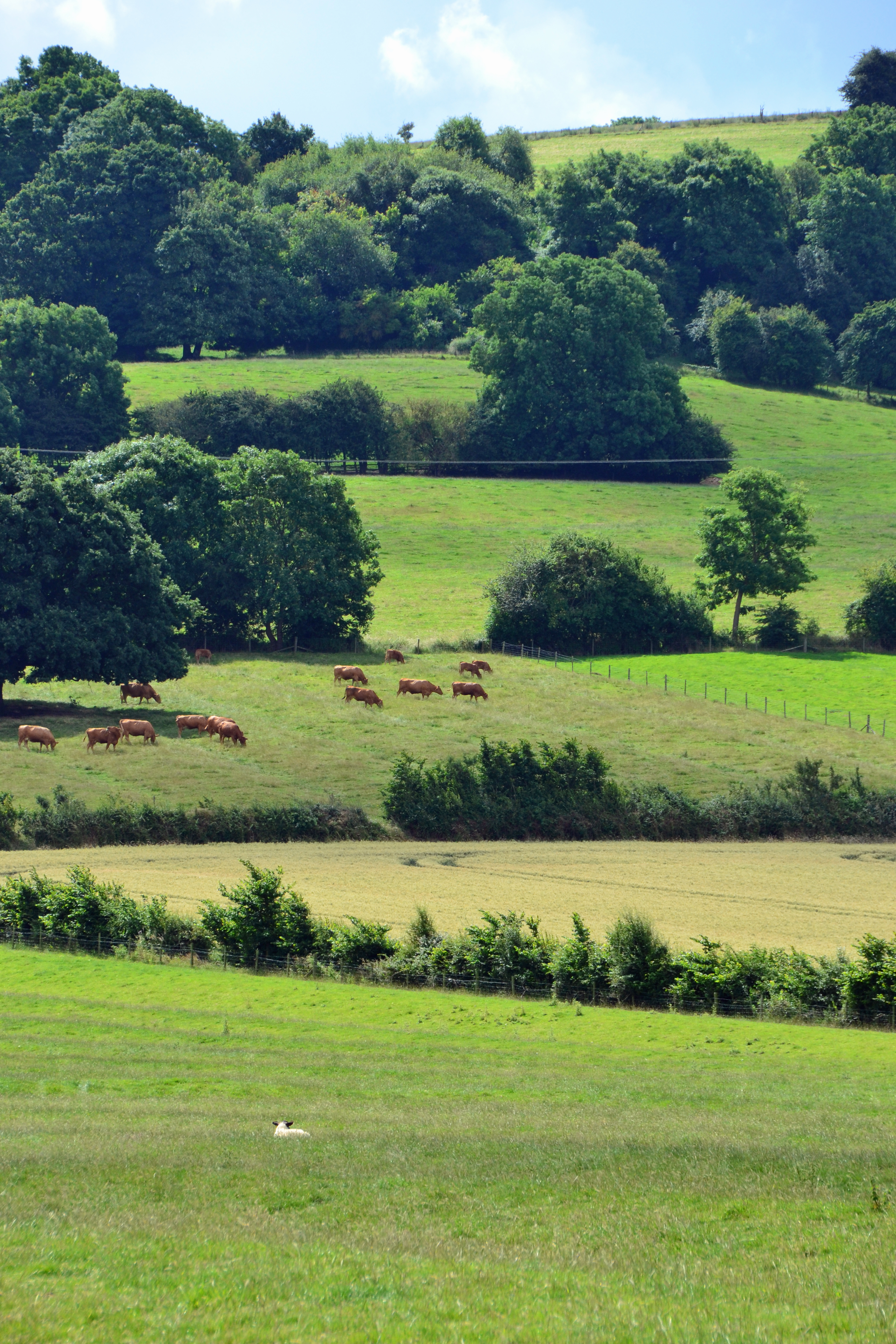 Meon Hill fields