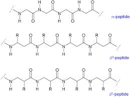 beta peptides wikimedia