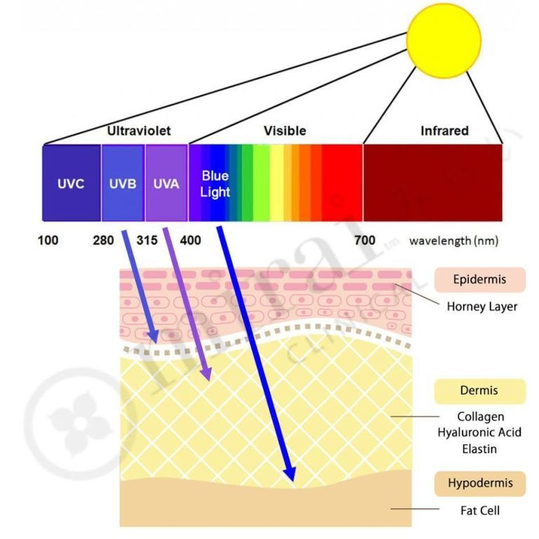 how blue lights affects the skin diagram