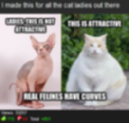 Misha Estrin, Best Memes of all time, Reddit, internet advice animals,  Cat lady sexy, real felines have curves, real women have curves parody, I made this for all the cat ladies out there, crazy, what men find attractive in women cats, this is not attractivebest feminist meme, best gender equality parody meme, skinny vs fat women, hypocritical cat, hilarious, laugh, Top 10 internet memes. Worst meme, Best Memedian. Memesha  Best Stand up comedian Minneapolis MN St paul,  , free hugs guy, free hugs university of minnesota , free shrugs , Top Minneapolis comics, comedians, book funnniest clean comedian, Hire clean Stand up Comedian, comedy, finalist funniest person with a day job mall of america, university of minnesota, free hugs twin cities, president University of Minnesota Comedy club, UofMN, UMN, hahahahaha, Laugh, lol, phoenix theater, 4th place Acme's Funniest Person In the Twin Cities Contest, Minneapolis professional entertainer Misha estrin, funnyjunk.com
