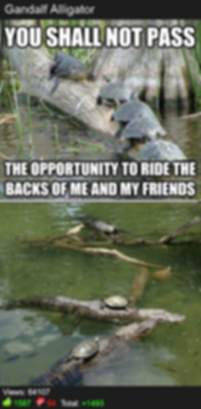 Misha Estrin, Best Memes of all time, Reddit, top internet advice animals,  alligator   turtles   crock   turtles ride alligator crocodile meme, Gandalf alligator, you shall not pass the opportunity to ride me and my friends, best Gandalf meme, funniest Gandalf pictures, Gandalf as an alligator, swamp,   hilarious, laugh, Top 10 internet memes. Worst meme, Best Memedian. Memesha  Best Stand up comedian Minneapolis MN St paul,  , free hugs guy, free hugs university of minnesota , free shrugs , Top Minneapolis comics, comedians, book funnniest clean comedian, Hire clean Stand up Comedian, comedy, finalist funniest person with a day job mall of america, university of minnesota, free hugs twin cities, president University of Minnesota Comedy club, UofMN, UMN, hahahahaha, Laugh, lol, phoenix theater, 4th place Acme's Funniest Person In the Twin Cities Contest, Minneapolis professional entertainer, funnyjunk.com