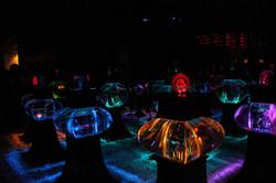 Aquariums of Light