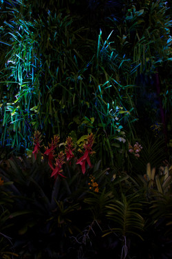 Night Plants