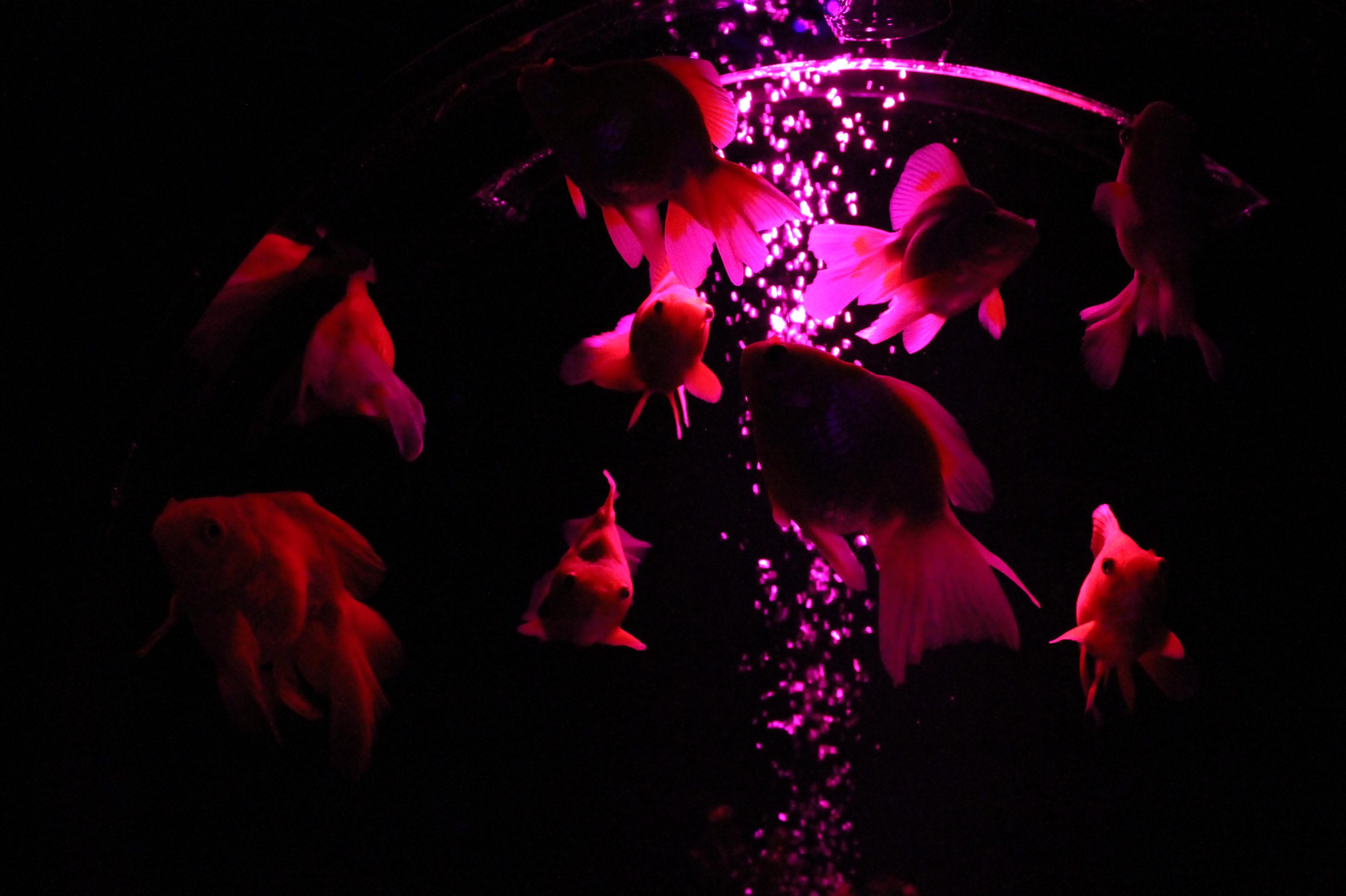 Fish Shine